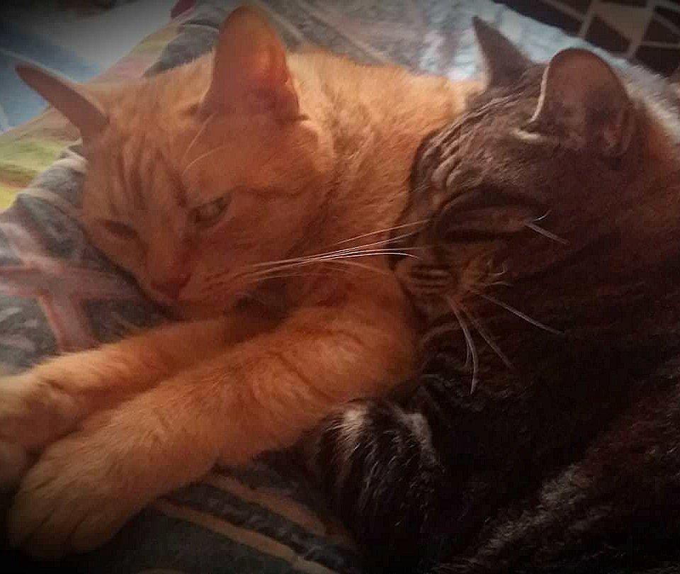 I gatti di Roberta Leonardi
