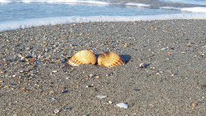 "Dal mare arriva una "" favola salata"""