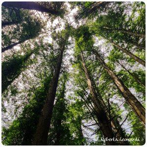 lettera dal bosco